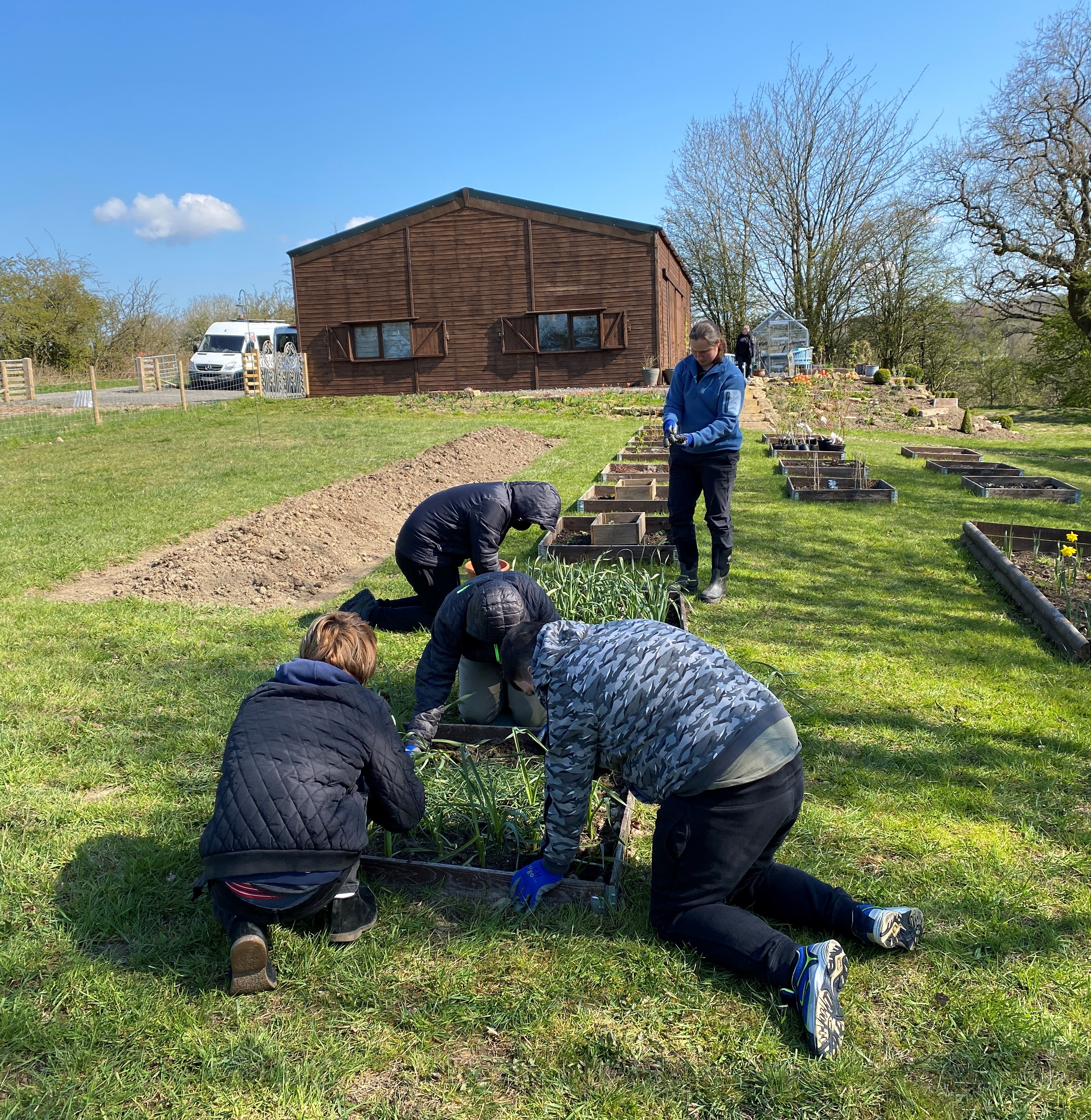 Learners tidying and planting in their allotments in under a blue sky