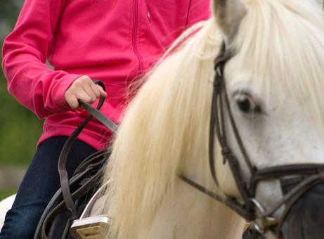 Children in care flourish under innovative equine scheme