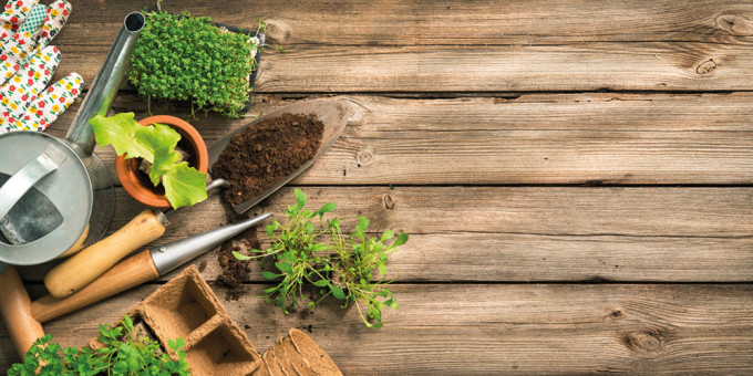 The thyme has come: Gardening Short Course available to buy
